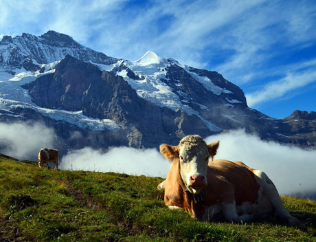 Švajcarci na referendumu o ekološkoj poljoprivredi i dobrobiti životinja