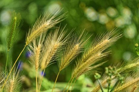 Efikasno suzbijte korove herbicidima