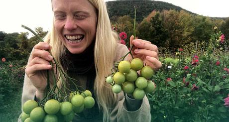 Zeleni paradajz, a ukusan kao crveni. Da li biste ga jeli?