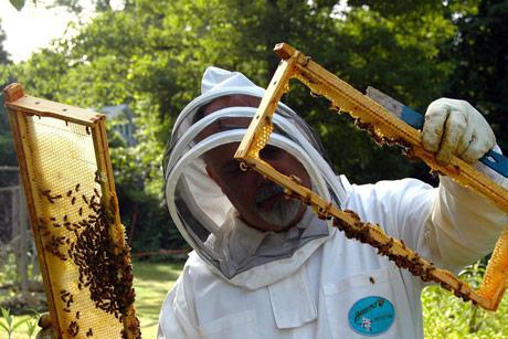 Vapaj državi da se starijim pčelarima dozvoli pristup pčelinjacima!