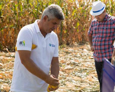 Domaći hibridi kukuruza adaptibilni na naš agroklimat