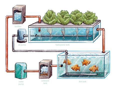 Akvaponika – prvo zalijete povrće pa u toj vodi odgajate ribe. I tako u krug