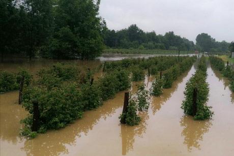 Šta se dešava sa klimom? U Srbiji poplave, a u Sibiru 38 °C