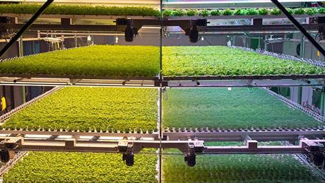 Vertikalna poljoprivreda rešenje za prenatrpane gradove