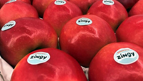 Zingy se bori za status među klubskim sortama jabuka