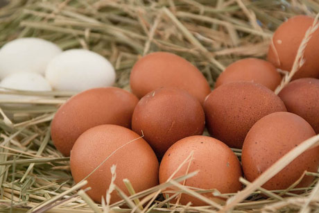 Kako sprečiti proizvodnju jaja van standarda?