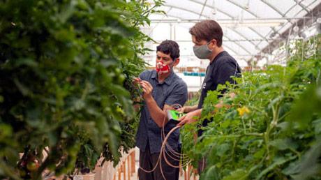 Senzori na biljkama smanjuju navodnjavanje za četvrtinu