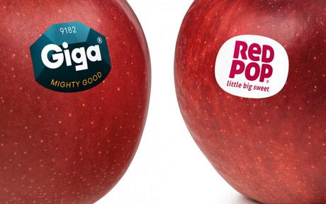 Nove sorte jabuka  - Giga i RedPop
