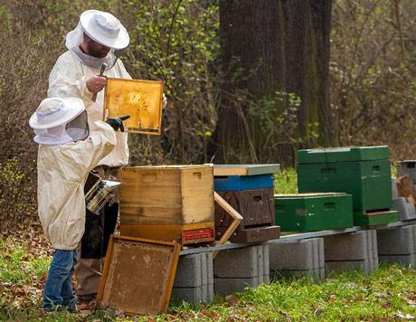 Pčelari dobijaju digitalnu mapu, voćari znanje o upotrebi pesticida