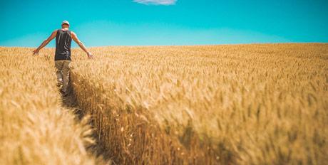 USDA: Gobalno veća potrošnja od proizvodnje žitarica