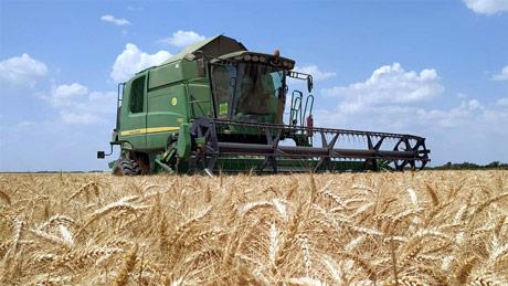 ZSV: Tek iznad 22,34 din/kg zarada na pšenici