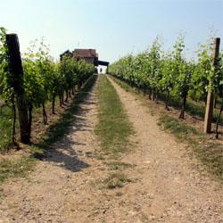 Dunavska vinska ruta kao turistički i kulturni brend