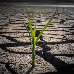 Srbija postaje zemlja suša i poplava