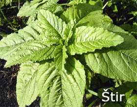 Rezistentnost korova na herbicide