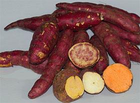 Batat ili slatki krompir