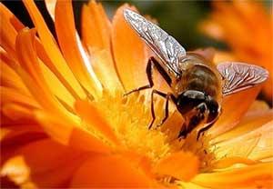 Kako sprečiti uginuće pčela zbog visokih temperatura