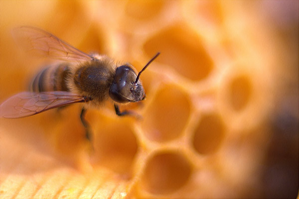 """Presek"" stanja pčelarstva kod nas"
