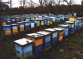 Novembar – mesec mirovanja pčela