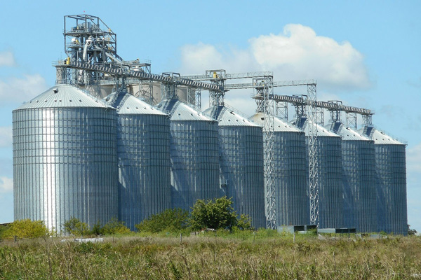 Robne rezerve kupuju pšenicu po 18 din