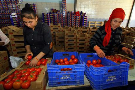 Rusija dozvolila dodatni uvoz paradajza iz Turske