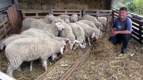 Otkup jagnjadi za 10.000 dinara