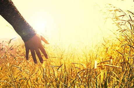 Jasno označavanje GMO u hrani u Francuskoj