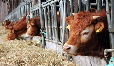 Skok cena stočne hrane na severozapadu Evrope