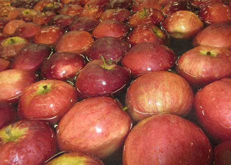 Poljaci povećavaju izvoz jabuka u Kinu