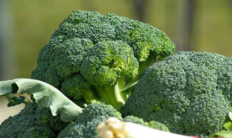 Brokoli u ishrani živine poboljšava kvalitet žumanceta