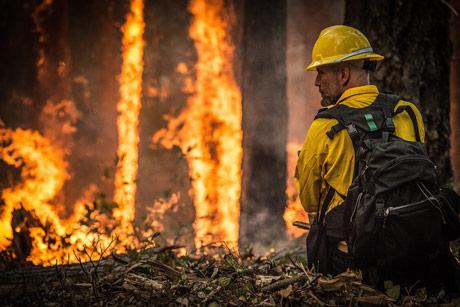 Požari se šire Amazonijom zbog soje i govedine
