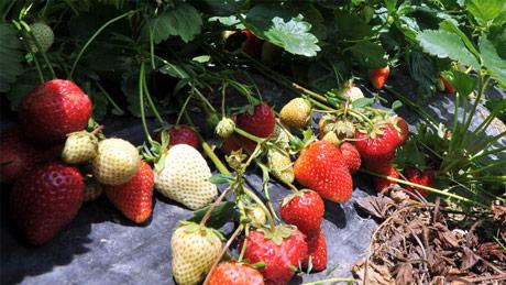 Škola ishrane biljaka: Gvožđe