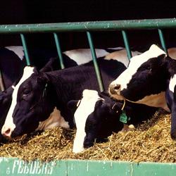 Nestle i dalje predvodi mlečne gigante