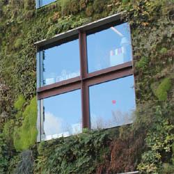 Zeleni zidovi za zelenije gradove