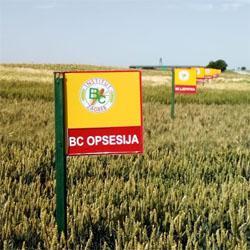 U Žarkovcu održan Dan polja strnih žita BC hibrida