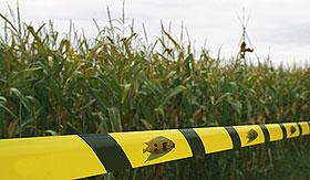 Trebaju li svetu GMO?
