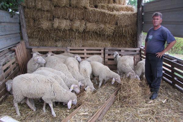 Kako imati i ovce i novce?