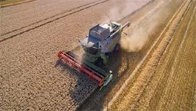 16.5t/ha pšenice - novi svetski rekord!