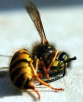 Otrovali pčele iz 500 košnica