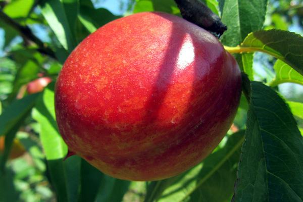 Zbog Bregzita u Britaniji rastu cene uvezenog voća i povrća