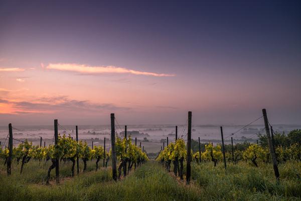 Poziv gazdinstvima koje gaje manje poznate sorte vinove loze da se upišu u evropsku Vitis bazu